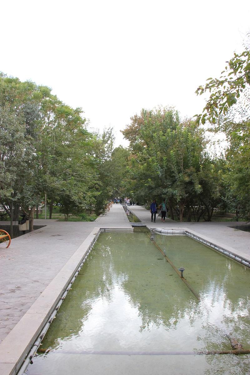 منظر اطراف درختان دیرزیست؛ سرو کهنسال منگاباد مهریز