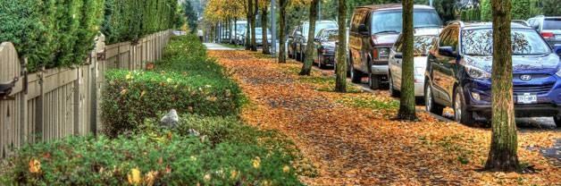 Choosing Urban Trees Guide