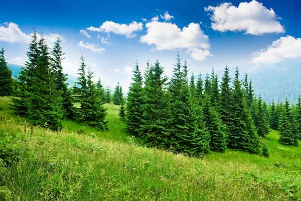 درختان مقدس