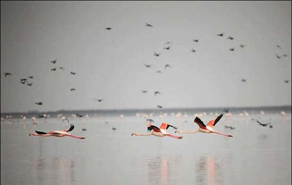 پرنده نگری و توسعه گردشگری پایدار در تالاب گمیشان