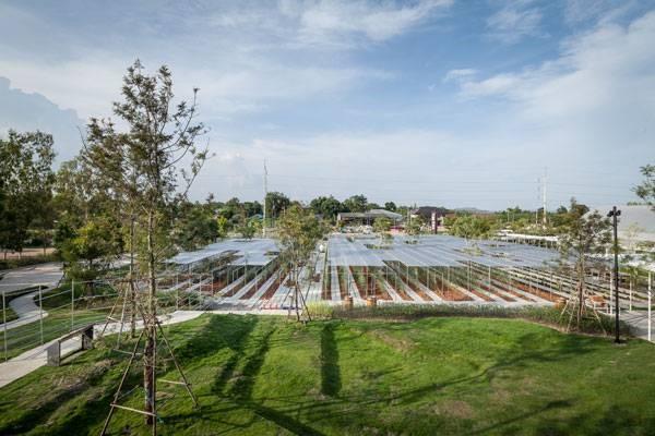 کمک طبیعت به طراحی در مزرعه کورو