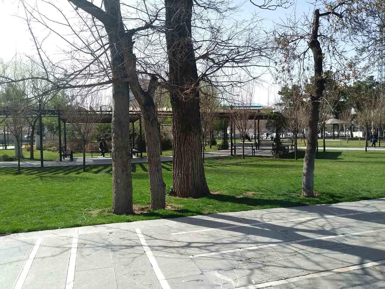 عدم رعایت فاصله مناسب برای کاشت درختان