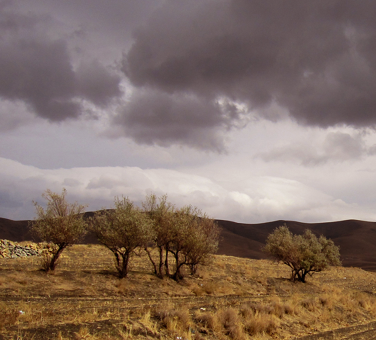 درختان، نشانه های هویتی