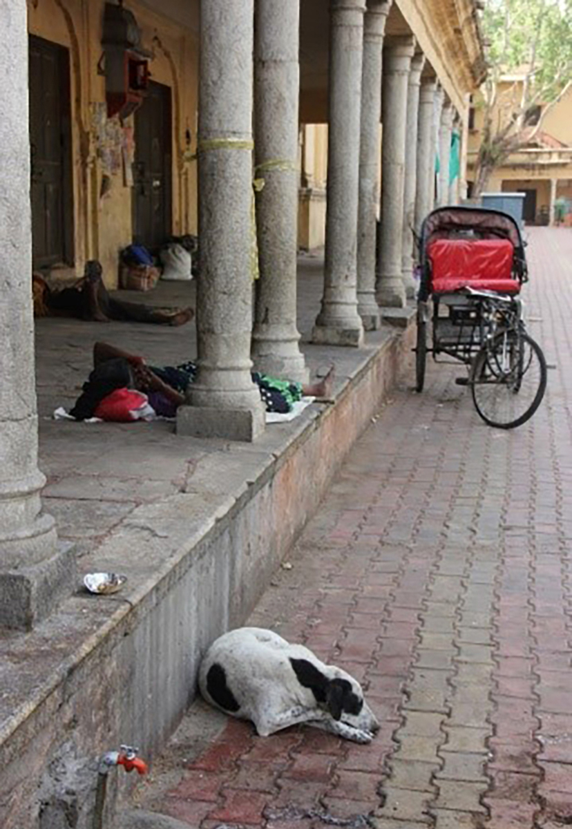 پیوستگی انسان و طبیعت در هند